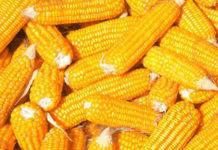 4 kroki do idealnej kolby kukurydzy