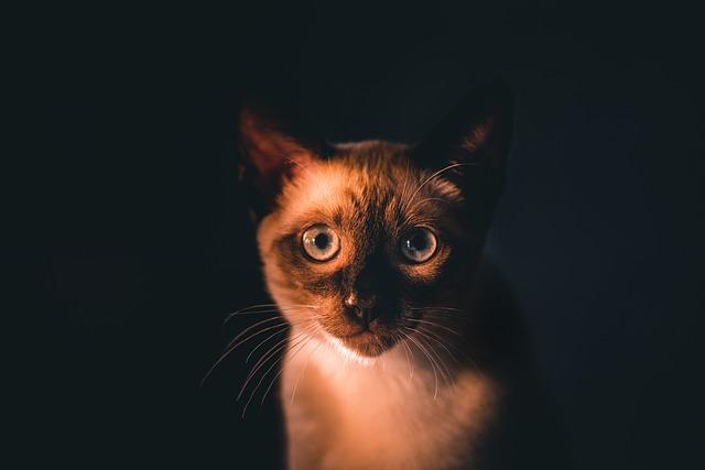Karma dla kota